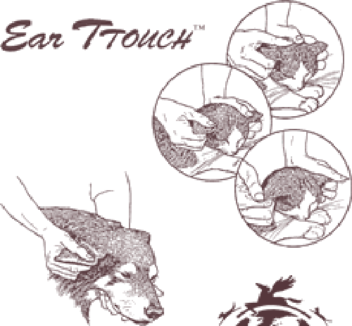 TTouch Workshops for Companion Animals Edie Jane Eaton Ear TTouch