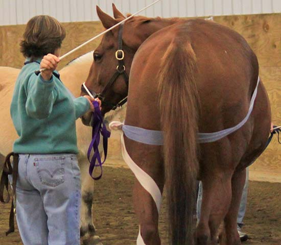 TTouch (TTeam) Workshop for Horses - Edie Jane Eaton